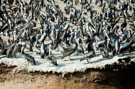 Webinar Explore Perù – La terra dei pellicani
