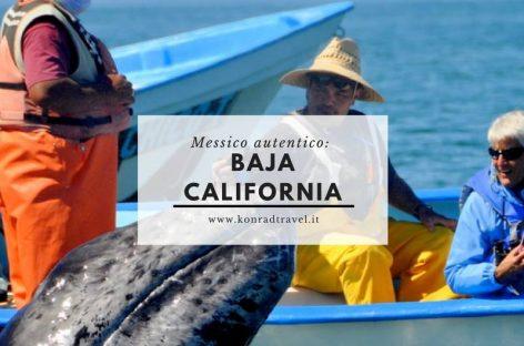 Konrad News: incontro con le balene in Baja California Sur 4 febbraio