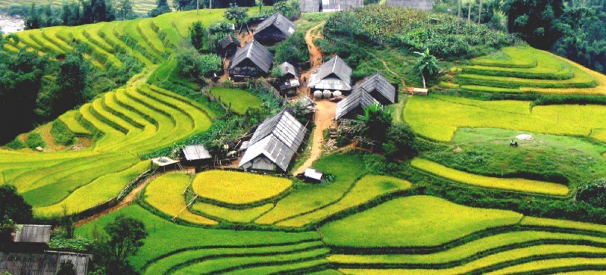Dove vedere le terrazze di risaie in Vietnam?