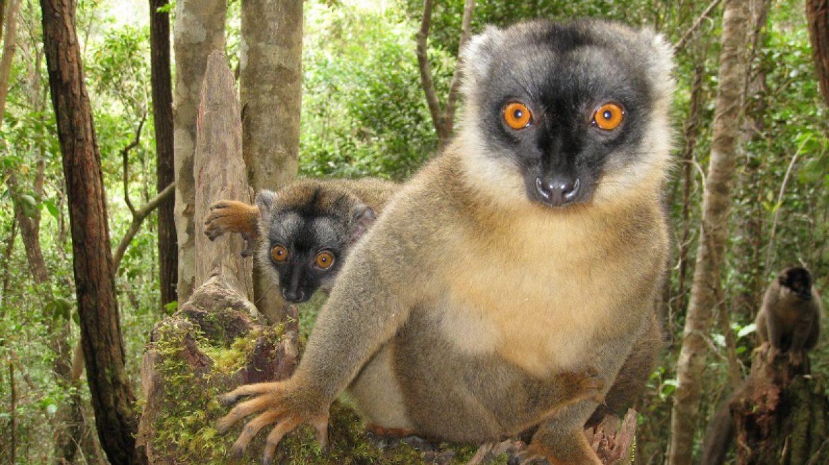 Pasqua e ponti aprile in Madagascar – Tour di gruppo & mare