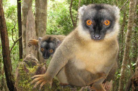 ✈ Completo! ✈ Pasqua in Madagascar – Tour di gruppo & mare