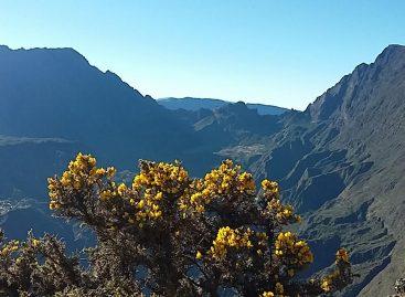 Webinar Gastaldi Réunion – La rarità dell'Oceano Indiano