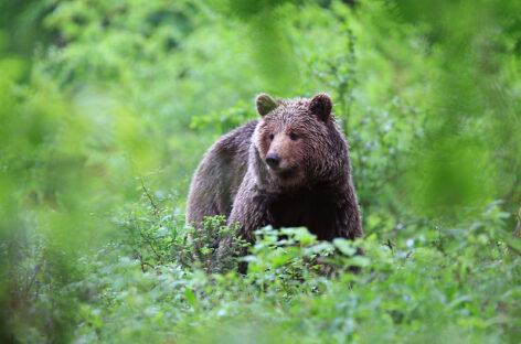 Webinar Slovenia – Una vacanza a impatto zero