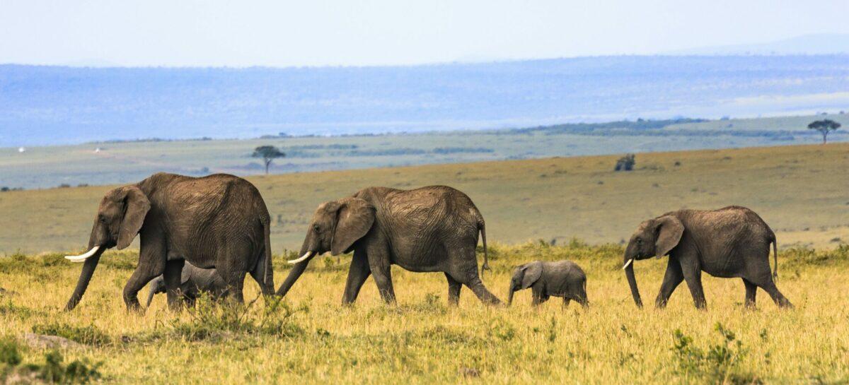 Webinar Namibia